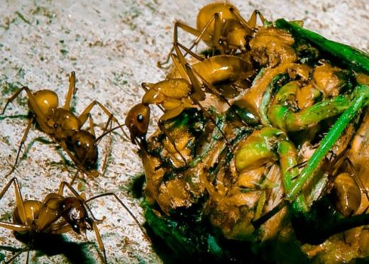 Ants and Cicada